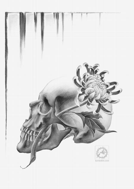 Art Galleries - Skull and a chrysanthemum drawing. - 61632
