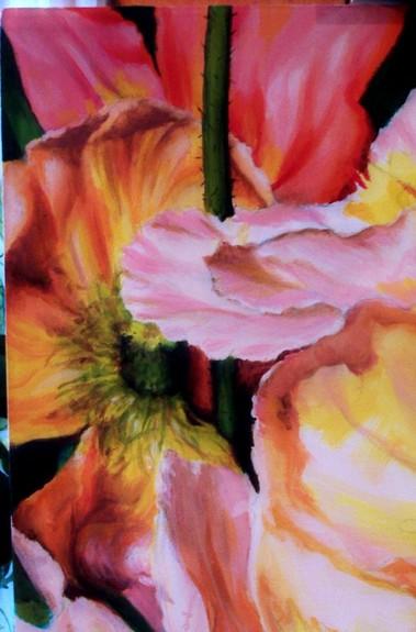 Art Galleries - Poppies - 50275