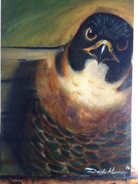 Art Galleries - Falcon - 111900