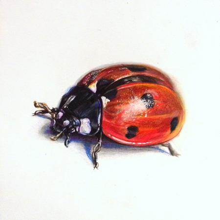 Art Galleries - Lady bug - 119831