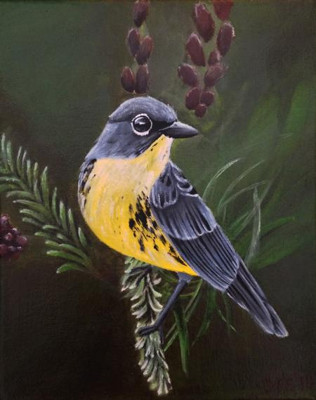 Art Galleries - Kirtland's warbler - 106842