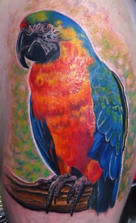 tattoos/ - Parrot  - 71562